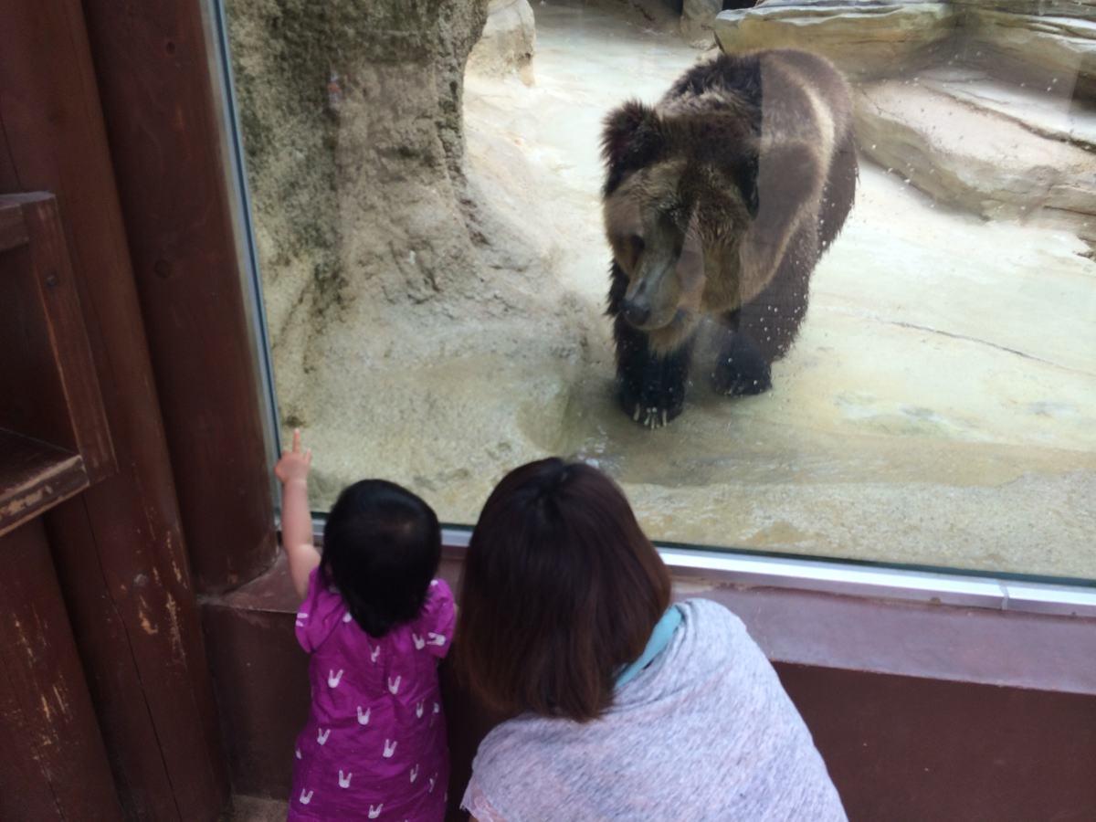 王子動物園動物のクマ