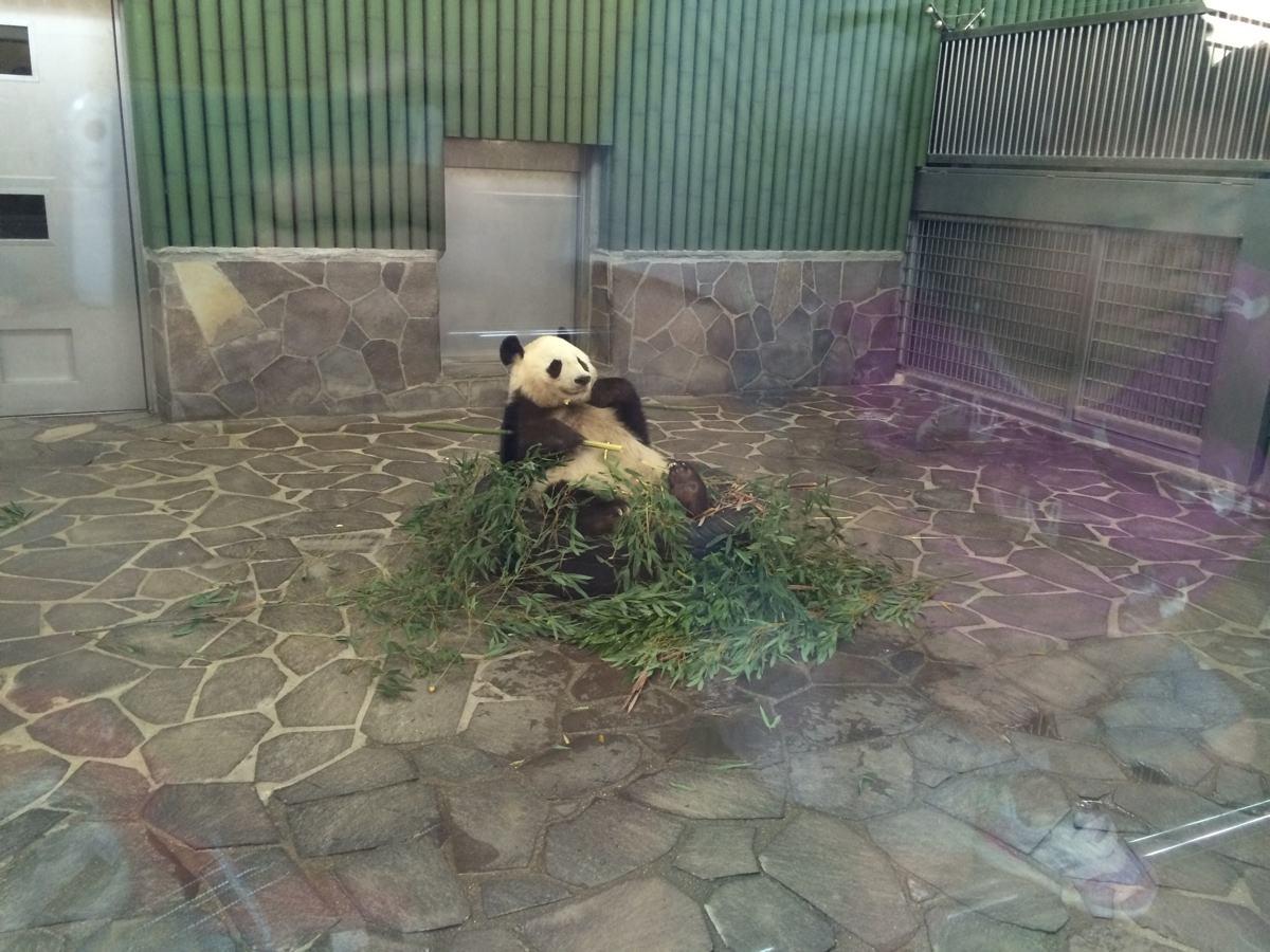 王子動物園動物のジャイアントパンダ