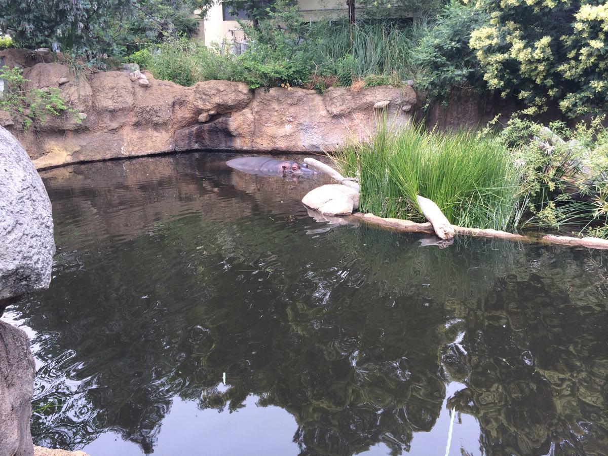 王子動物園動物のカバ