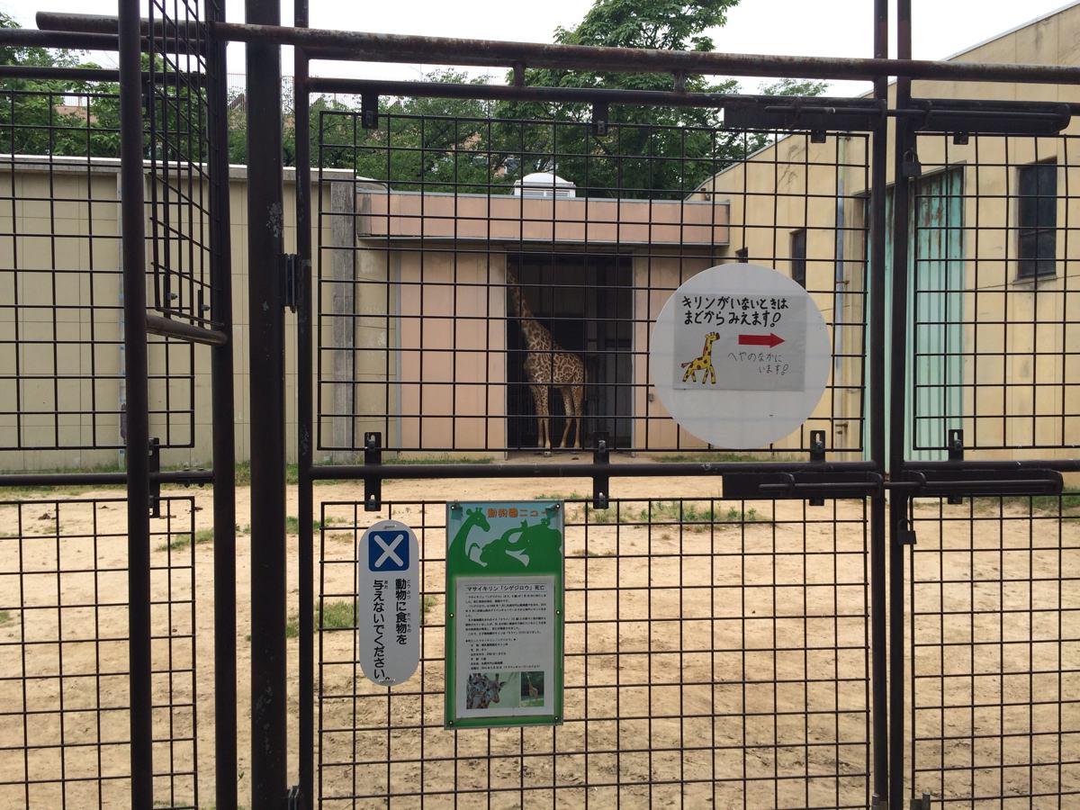 王子動物園動物のキリン