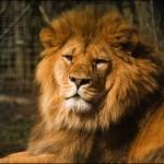 「百獣の王」を検索するとライオンより武井壮が先に出てくる件にビビった!