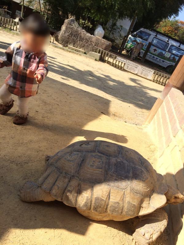 渋川動物公園の動物たち