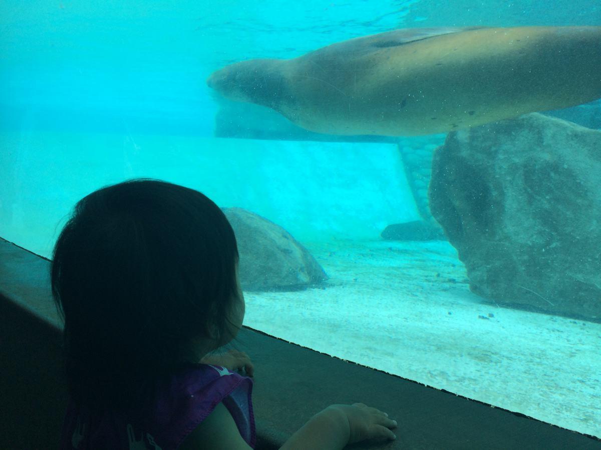 王子動物園動物