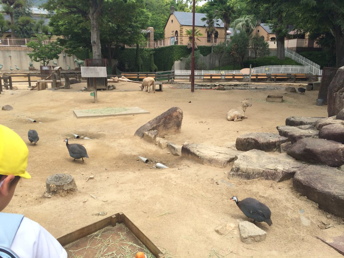 王子動物園動物ふれあいコーナー
