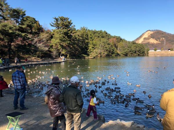 【岡山子供の遊び場】動物のエサやり体験ならここをおすすめする。玉野深山公園の赤松池。