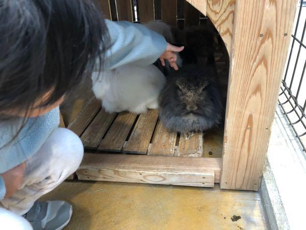 雨の日でも楽しめて小動物とも触れ合える動物園。神戸どうぶつ王国が子供も喜んで楽しめた!