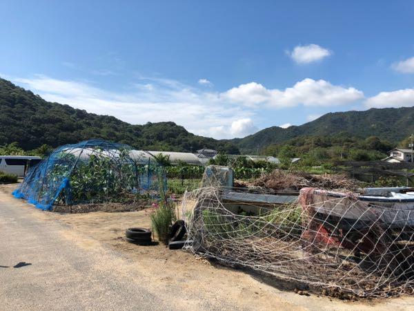 岡山の小串観光芋掘り園の様子